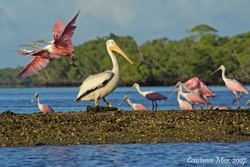 Everglades boat tours